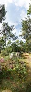 Menhirs dans la forêt. Le Petit Ménec. Carnac.