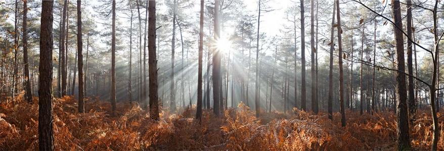 Lumière d'hiver sur la forêt.